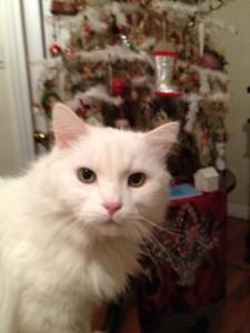 Mss Emily Christmas 2012